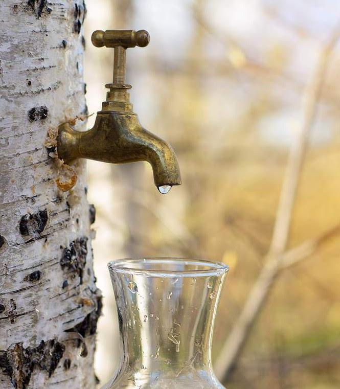 Vegetal Water.jpg